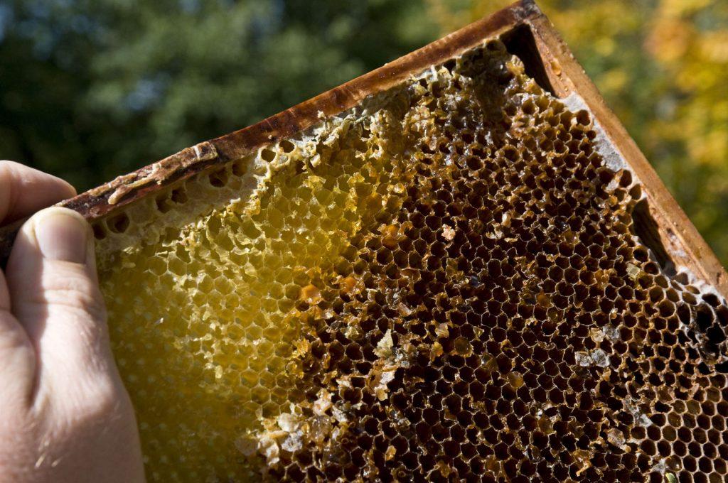 Bienenwaben von unserem Imker liefern besten Wachs für gute Salben