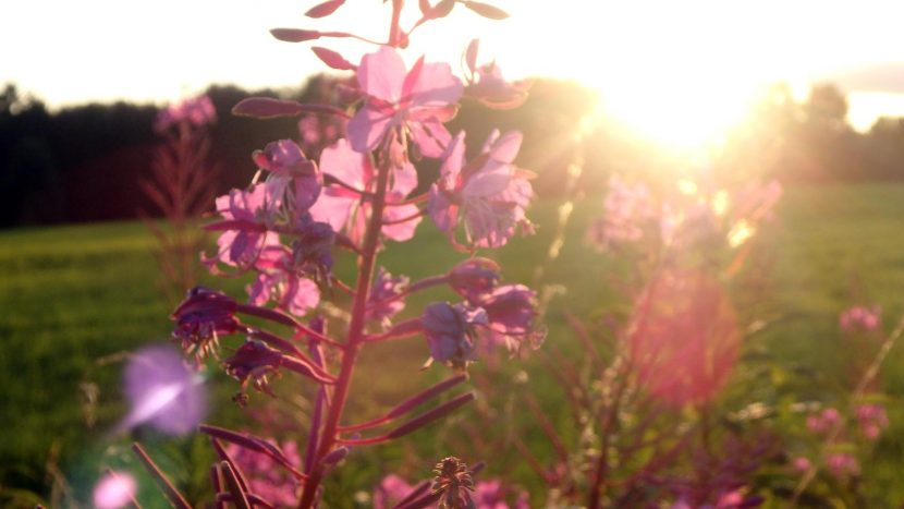 Sonnenuntergang im Spätsommer