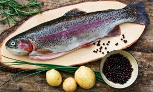 Lachs Forelle